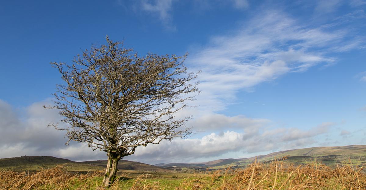 003 Dartmoor & Upland-2ndJan2014Dartmoor-6