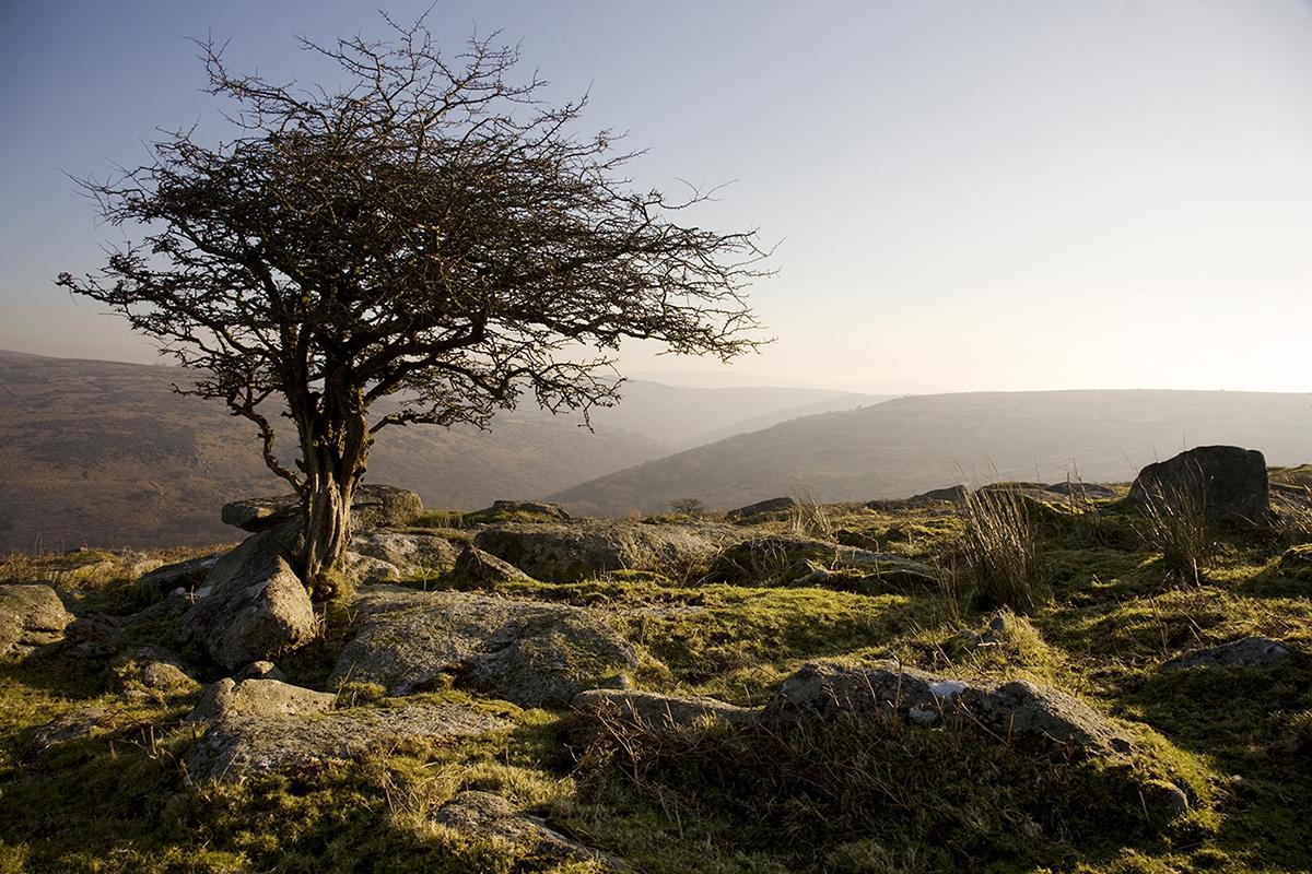 006 Dartmoor & Upland-Combestone Tor Feb 13-3