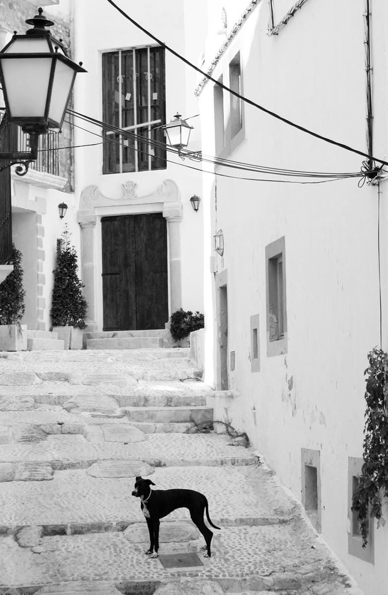 009 Euro_Travel 007el perro