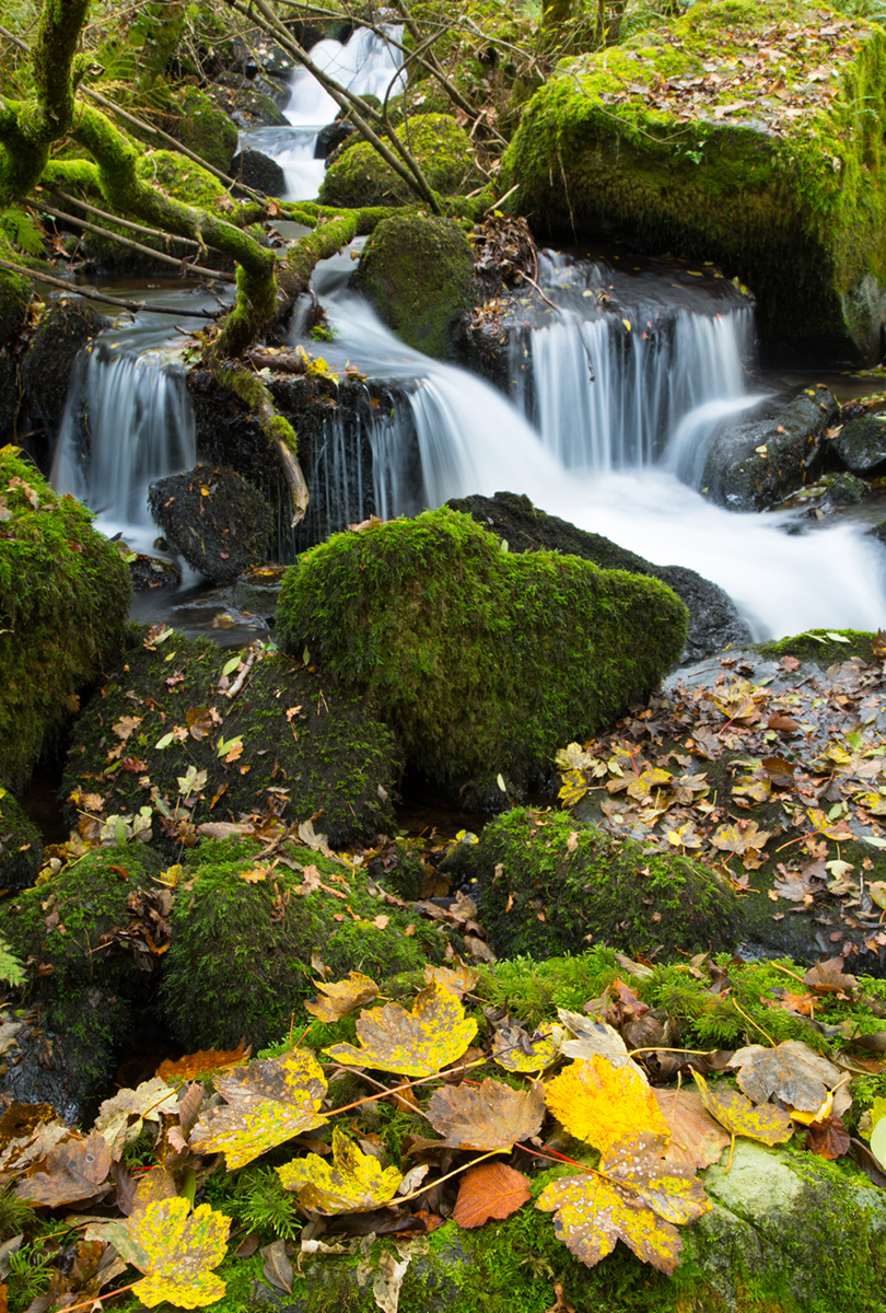 010 Rivers & Woodland_ColleyBrook_Oct2015-3