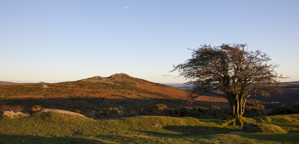011 Dartmoor & Upland-YarTorDown-1