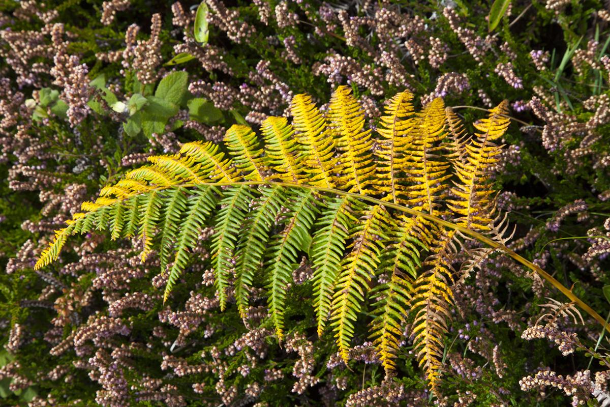 013 Dartmoor & Upland-Sept2015-186