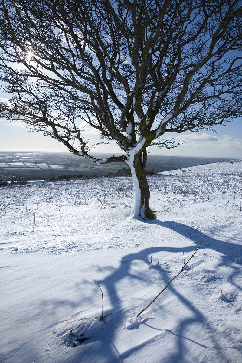 014 Dartmoor & Upland-035DartmoorFeb09