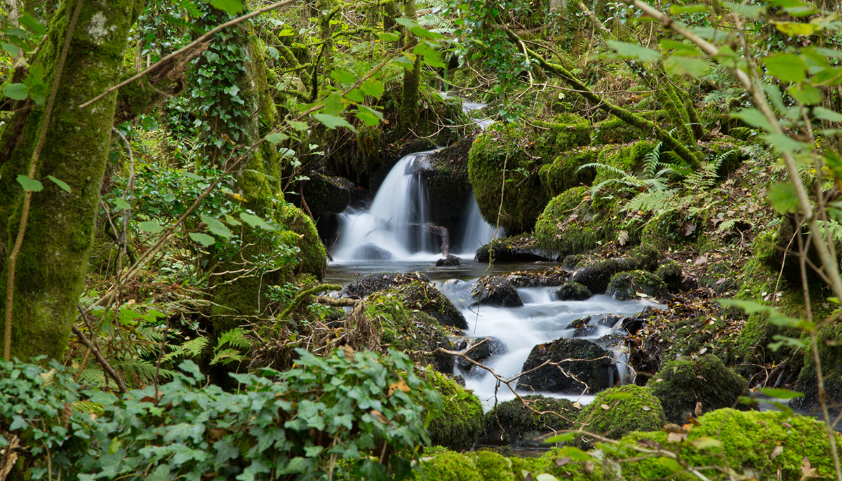 015 Rivers & Woodland_ColleyBrook_Oct2015-8