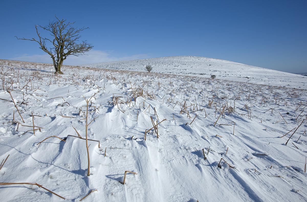 017 Dartmoor & Upland-036DartmoorFeb09