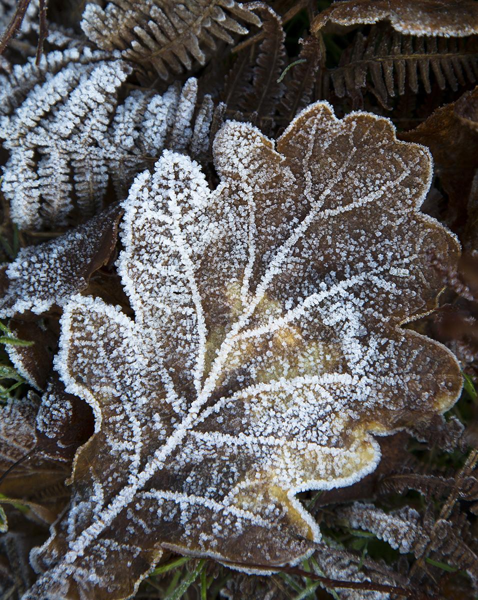 022 Dartmoor & Upland-Dartmoor_Dec2014-2