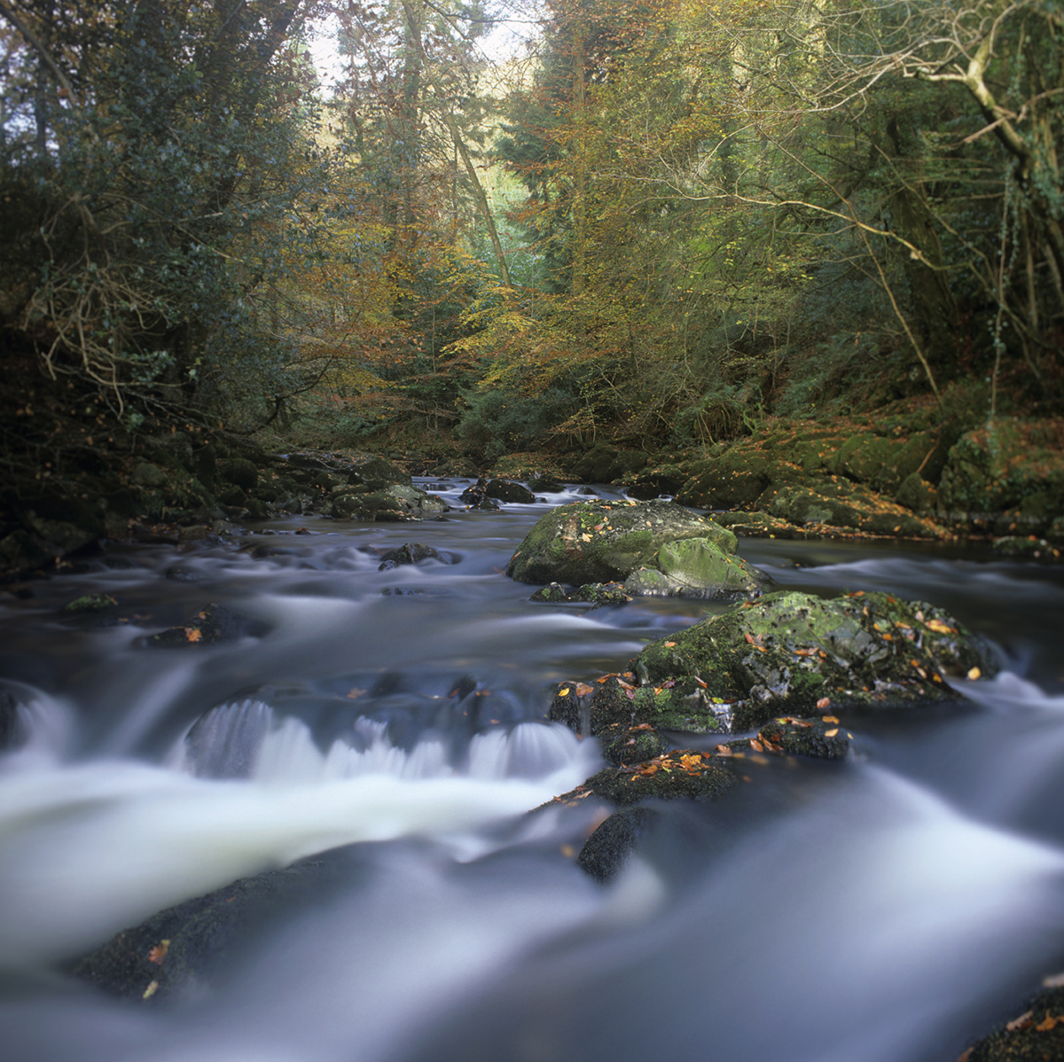022 Rivers & Woodland_ErmeNov09a