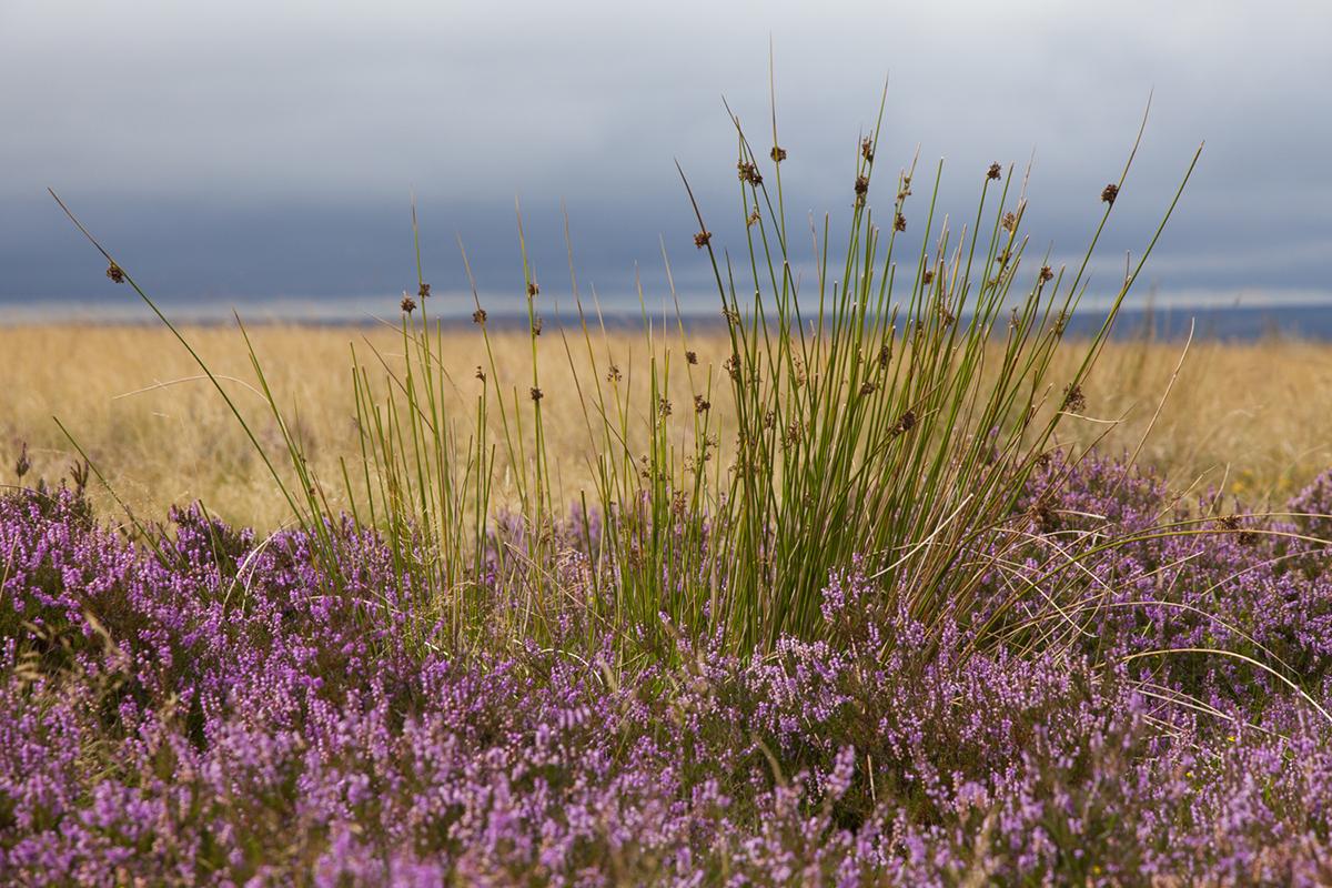 045 Dartmoor & Upland-Sept2015-1