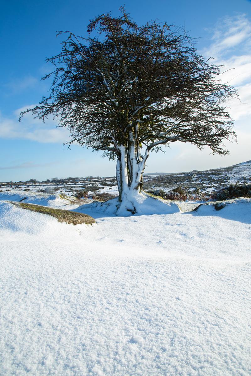 047 Dartmoor & Upland-DartmoorSnowJan15-11