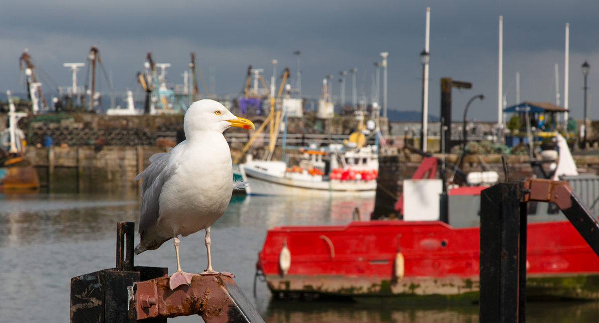 048 Harbours & Boats_Torbay_March2014-7