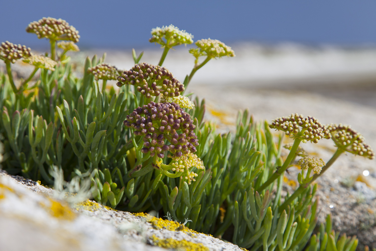 076 Isles of Scilly_Sept2015-113