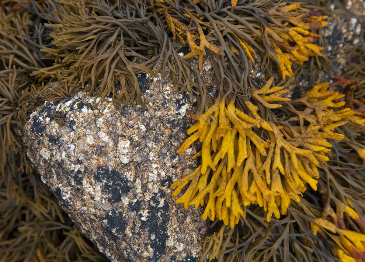 079 Isles of Scilly_Sept2015-170